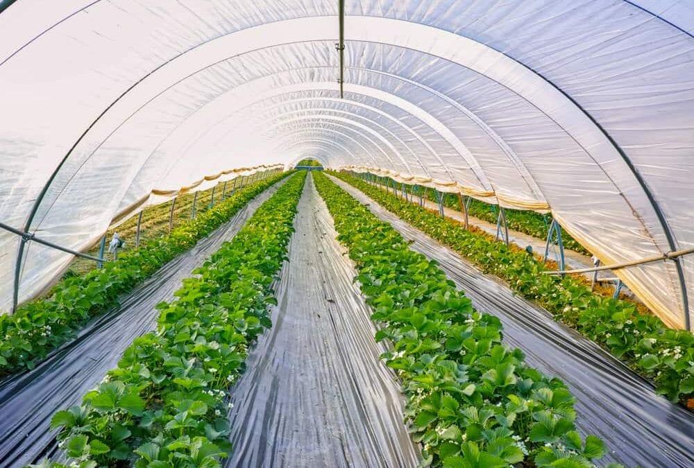 Polyethylene Greenhouse Covering